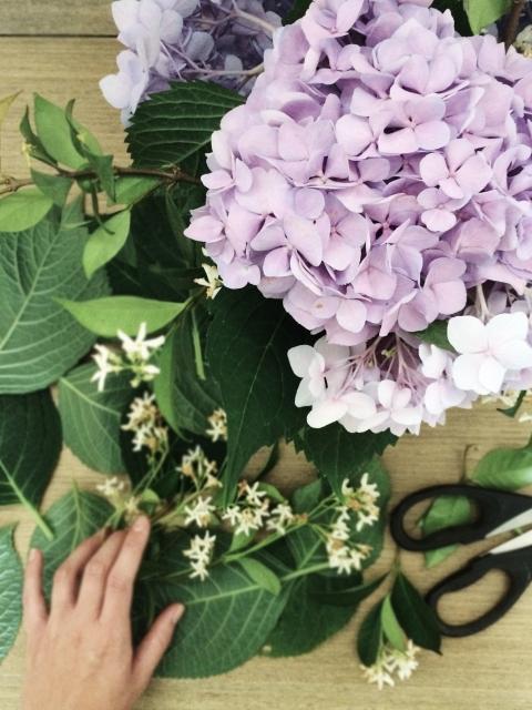 Hydrangea + Jasmine Cuttings